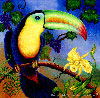 Toucan-Bird Paintings