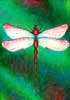 dragonfly painting.