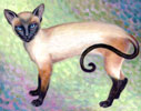 Siamese Cat - Cat  Gallery