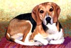 Beagle - Dog Painting
