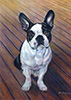 Boston Bull Terrier Oil Painting
